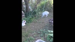 戦うことを途中でやめる猫がいた