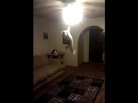 CAT JUMPS 7 + Feet Up Turns out Ceiling Light  Amazing