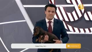Информбюро 11.07.2018 Толық шығарылым!