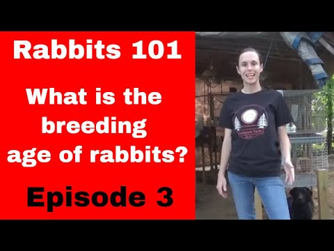 , title : 'Rabbits 101 Episode 3: Breeding Age of Rabbits and Sexing