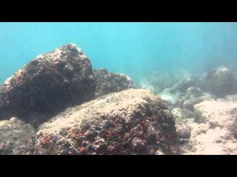 Scuba Diving Trincomalee Sri Lanka with Taprobane Divers
