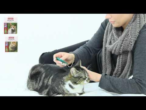 Beaphar Flea&Tick Biodråper katt - film på YouTube