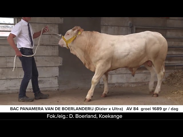 Video BAC Panemera vd Boerlanderij