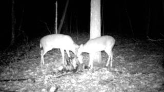 Trail Camera Shots - Life Goes On - April Wine