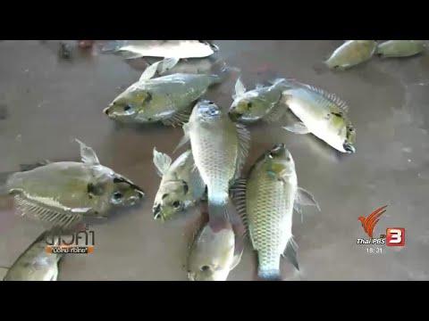 พยาธิตัวกลมในปลา