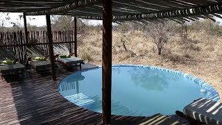 5 Safari Camps to Visit in South Africa