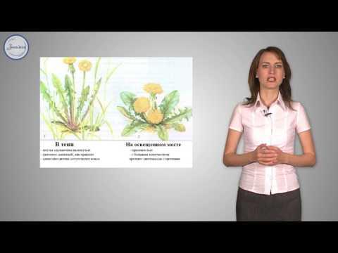 Приспособление растений к условиям среды: освещенность