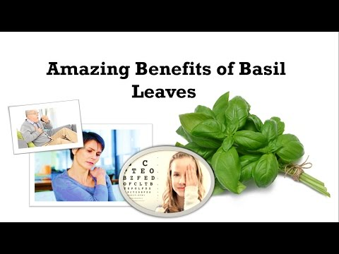 Video Amazing Benefits of Basil Leaves