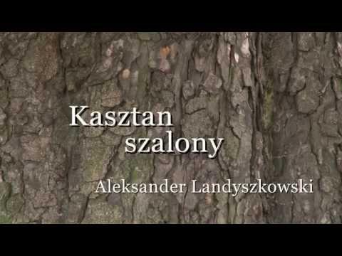 Wideo1: Kasztan szalony - Aleksander Landyszkowski