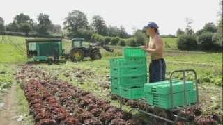 Bio Kann Mehr   Bioland Hof Großholz   Nachhaltiger Anbau Mit Pferden