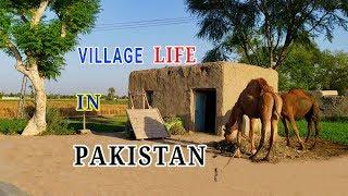Pakistan Village Life Daily Routine | Pakistani Rural Punjab