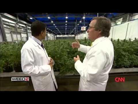 WEED 2 Cannabis Madness Dr Sanjay Gupta Reports 2014 CNN (subtitulos en Español)