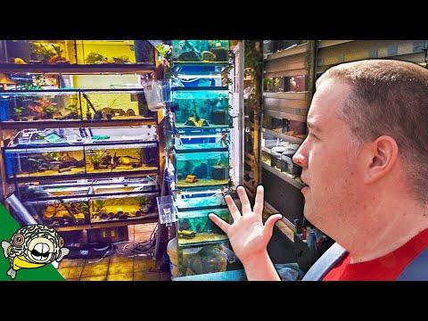 German Fish Store