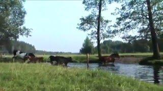 Film do artykułu: Puszcza Knyszyńska - tutaj...