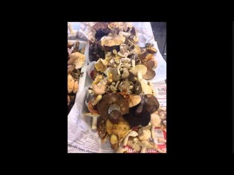 Trattamento di unghia di mano di fungo