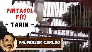 PINTAGOL CD BAIXAR DE CANTO