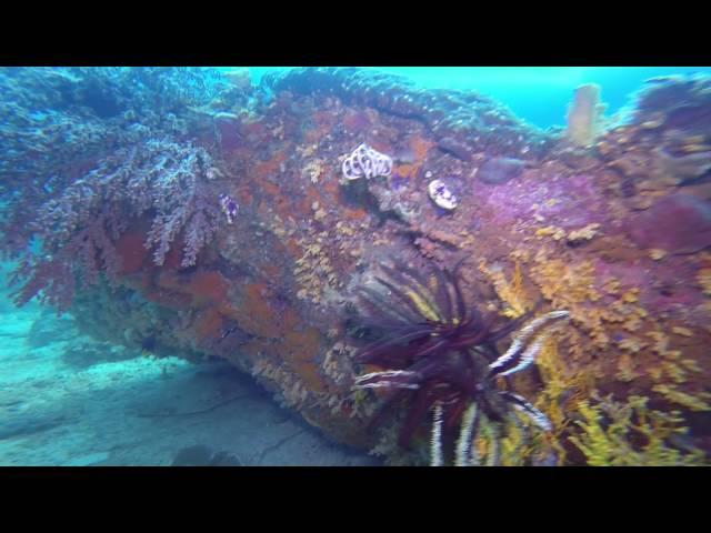 Dykning i Filippinerne