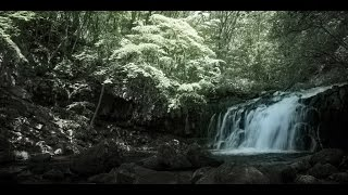 撮影会「新緑の蓼科大滝を撮る(長野)」講評会
