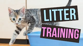 How to Litter Train Baby Kittens