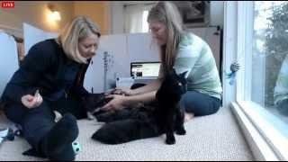 Tiny Kittens Dr F's visit part 1