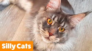 AWWW Cutest Cat Videos! Funny Pet Videos