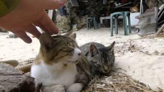 八重山諸島のネコ=^・^=たち