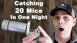Impressive Mousetrap Catches 20 Mice In One Night.  Mousetrap Monday