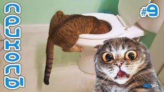 Приколы с Котами и Кошками 2019 | Смешные Коты и Кошки 2019 | Приколы с Животными #9