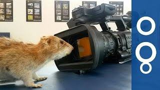 Spray the Rats Away: Better Ways to Get Rid of Rodents - Futuris