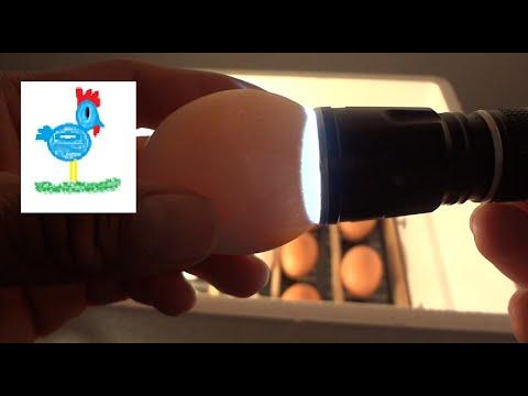 Incubadora ovoscopia Incubadora casera 3ra parte