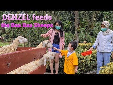 , title : 'DENZEL feeds the Baa Baa SHEEPS !!