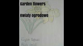 Names of common garden flowers in Polish. Nazwy popularnych kwiatòw ogrodowych po Angielsku