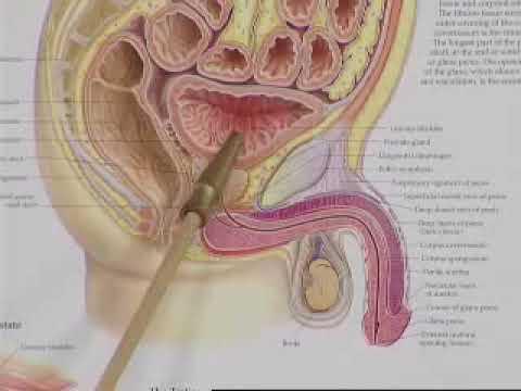 Tè verde e il cancro alla prostata