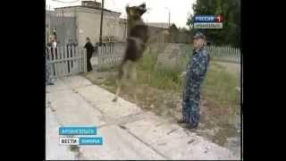 В Архангельске - экзамен у кинологов и их собак