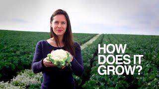 CAULIFLOWER   How Does It Grow?