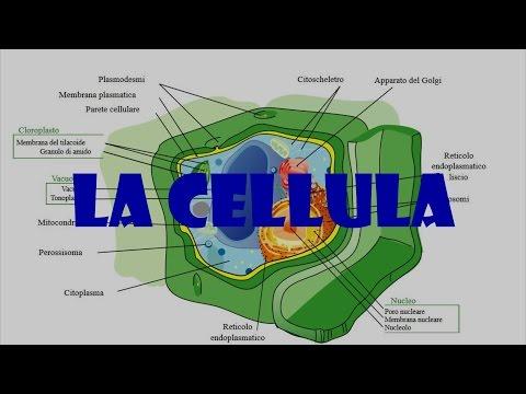 Le dimensioni del tumore prostatico