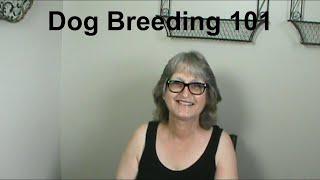 Dog Breeding 101