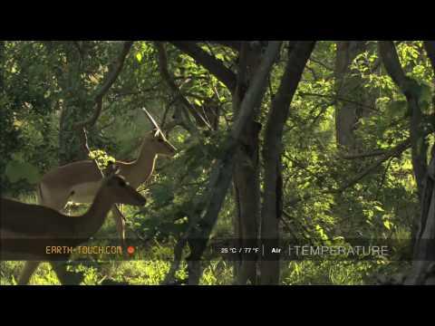 أفلام الطبيعة HD …مجموعة الغزلان