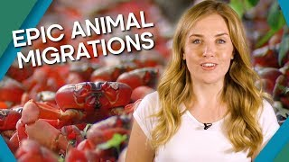 Epic Animal Migrations - Earth Unplugged