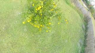 1 Month of Flying FPV
