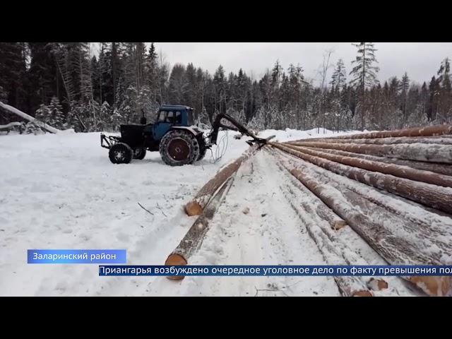 Чиновники из Минлеса отдали под вырубку молодые деревья