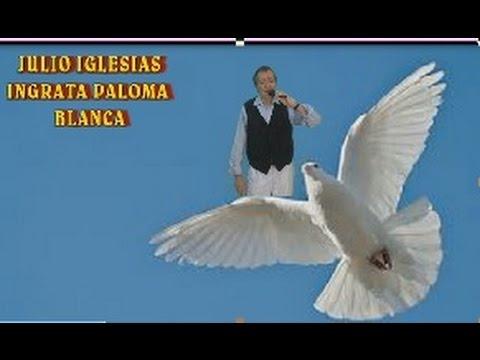 JULIO IGLESIAS INGRATA  PALOMA BLANCA