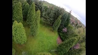DRONE CRASH TREE DJI FPV