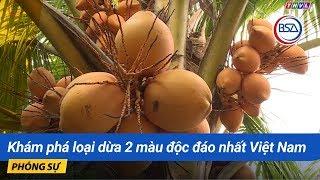 Khám Phá Loại Dừa 2 Màu độc đáo Nhất Việt Nam | Khám Phá Miền Tây | BSA