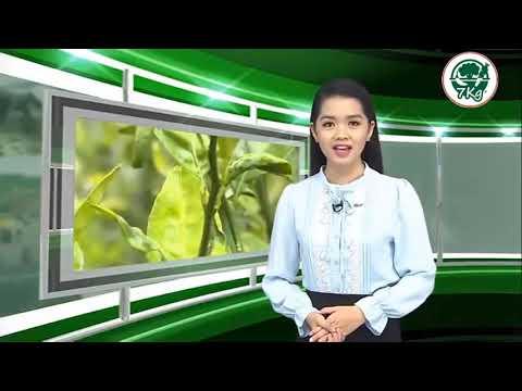 7kg | Bệnh vàng lá thối rễ, vàng lá gân xanh không còn là nỗi lo