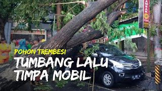 Pohon Trembesi di Tulungagung Tumbang Timpa Mobil Milik Warga