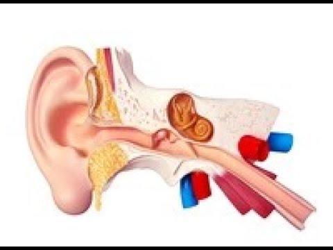 Hipertoniczny dyskineza dróg żółciowych leczenie