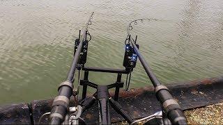 Carp Run Compilation! #freestylefishing Part I