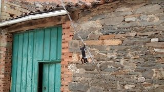 Mission Impossible CAT, a kitty from roof to floor throught branch