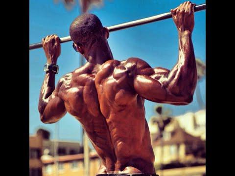 Lappareil auxiliaire des muscles de squelette